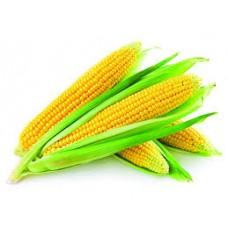 Şeker Mısır Tohumu Tatlı Mısır Yemelik Haşlama Mısır 1.Kalite Yerli Tohum 20 Adet