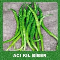 Biber Tohumu Acı Kıl 100 Adet Solucan Gübresi Hediyeli