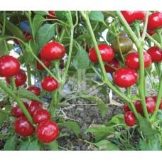 Acı Kırmızı Yakantop Biberi Tohumu 100 Adet Tohum Yakan Top Solucan Gübresi Hediyeli