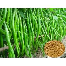 Biber Tohumu Yeşil Tatlı 100 Ad Solucan Gübresi Hediyeli